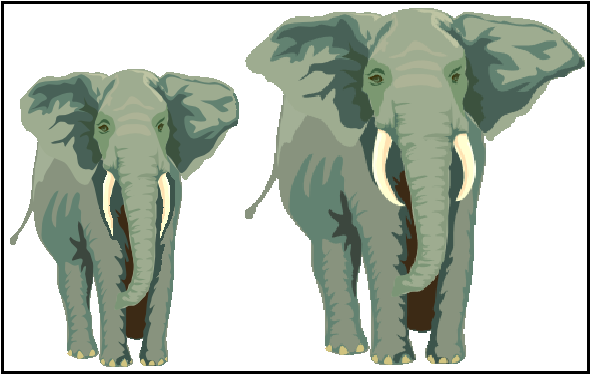 african forest and savanna elephant comparison